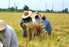 بیش از ۱۳ هزار میلیارد ریال غرامت سیل به کشاورزان پرداخت شد