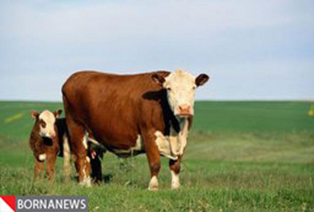آشنایی با فواید شگفت انگیز مصرف روزانه شیر