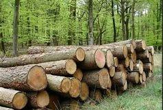 کشف 3 تن چوب قاچاق در گیلان