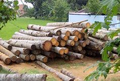 کشف 30 تن چوب قاچاق در فومن
