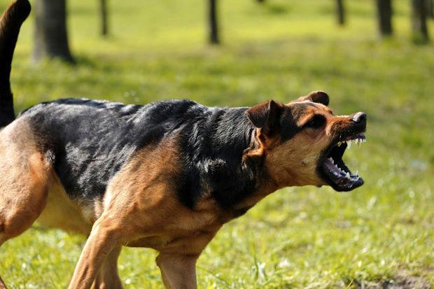 حمله سگ وحشی به زن باردار!