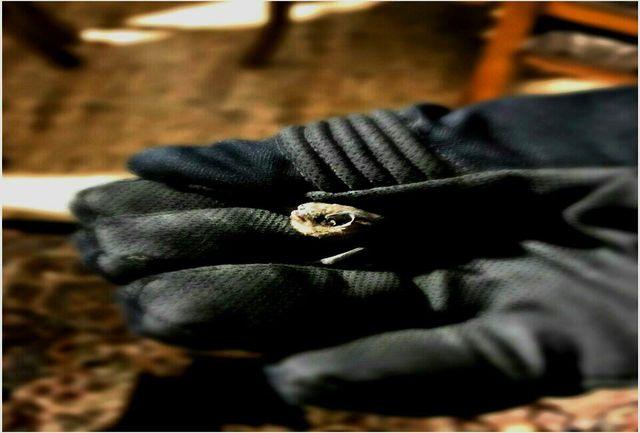 خفاش سرگردان در دستان آتش نشان شهرباران
