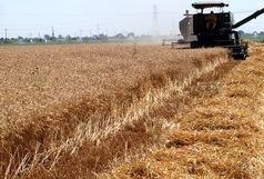 مرگ راننده در مزرعه برنج