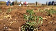 حمایت فائو از ایران در زمینه تقویت نظامهای ملی پایش و هشدار زودهنگام خشکسالی کشاورزی