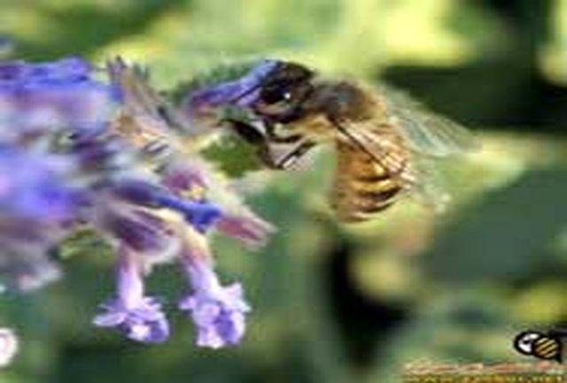 حشرات با بزرگ شدن سوراخ لایه ازن گرسنه ماندهاند