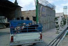 اجرای طرح جمع آوری سگ های ولگرد در روستای همدانک