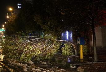 خسارت برف به درختان در ارومیه