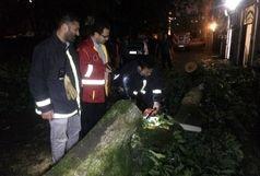 عملیات آتش نشانان لاهیجان در پی سقوط درخت