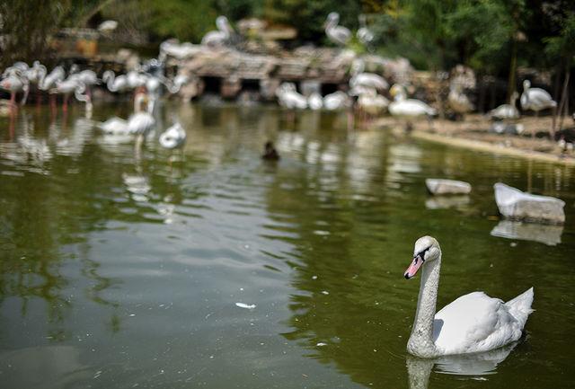 افزایش 30 درصدی جمعیت انواع پرندگان در منابع آبی منطقه آزاد ماکو