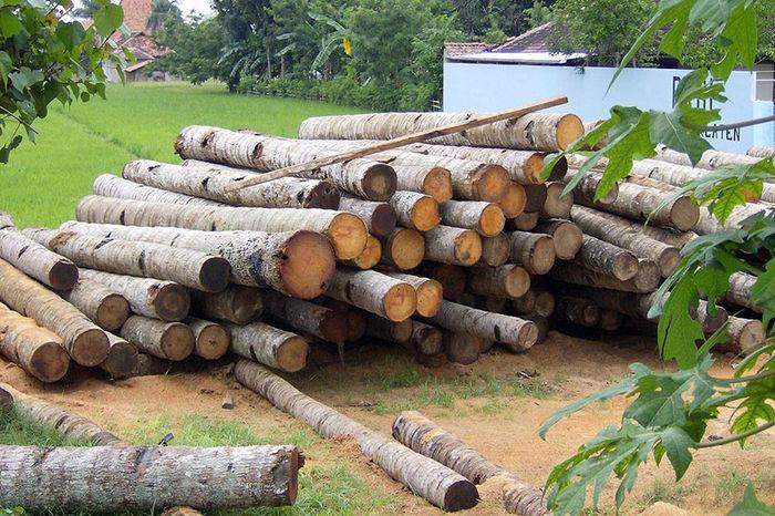 کشف بیش از 4 تن چوب جنگلی قاچاق در فومن