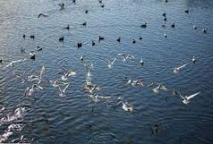 کاهش مهاجرت پرندگان به تالاب کجی نهبندان