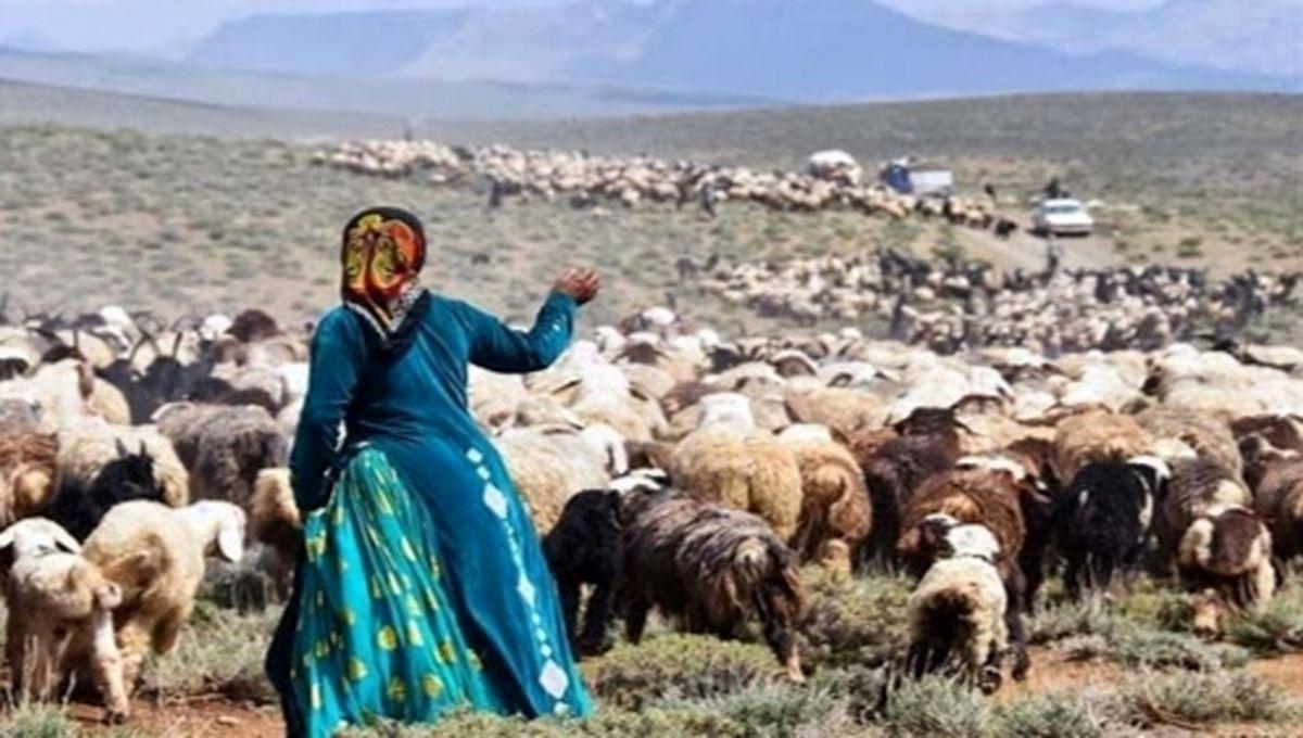 اجرای طرح خرید تضمینی دام مازاد عشایر در کهگیلویه و بویراحمد