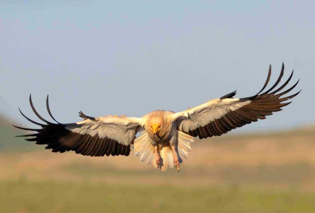 357 گونه جانوری در اکوسیستم های آبی و خشکی کردستان شناسایی شد