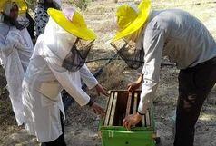 بهره مندی 305 نفر از روستائیان قم از آموزش های مهارتی
