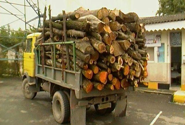 توقیف 4 تن چوب قاچاق در شفت