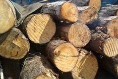 کشف بیش از 4 تن چوب قاچاق در زاهدان