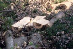 کشف 8 تن چوب جنگلی قاچاق در املش
