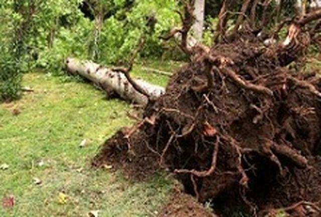29 کشته در طوفان سنگین ایتالیا+ ببینید