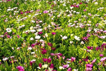 راه اندازی مرکز تحقیقات گیاهان در قم