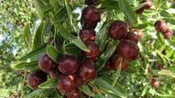میوهای برای درمان فشار، قند خون و افسردگی