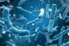 چه مقدار باکتری بر روی زمین وجود دارد؟