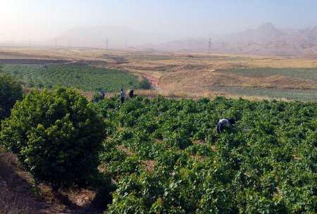 نیاز درختان مناطق گرمسیری به آبیاری