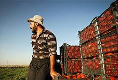 رب گوجه فرنگی در بورس کالای ایران عرضه می شود