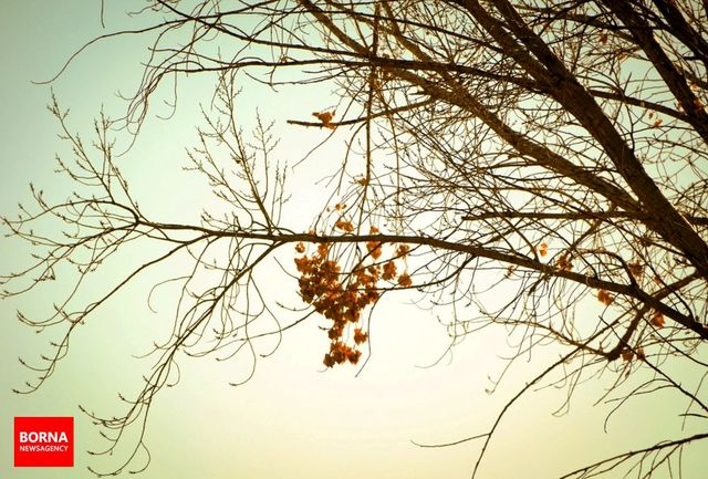 آغاز هرس درختان سطح شهر با شروع فصل پاییز