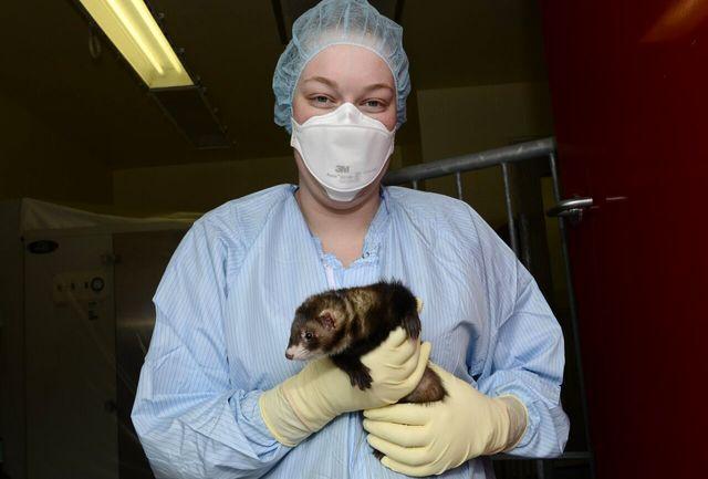 ثبت اولین واکسن کرونا برای حیوانات