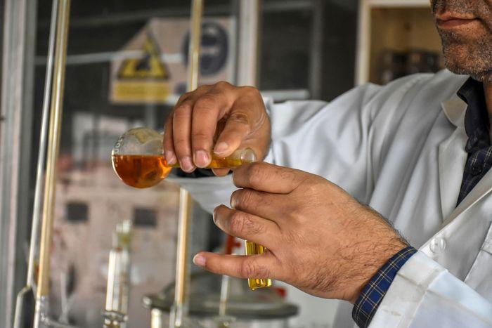 الکلها را از روی مشخصات ظاهری میتوان تشخیص داد؟