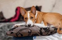 10 نکته ضروری نگهداری حیوانات در آپارتمان را فراموش نکنید!!
