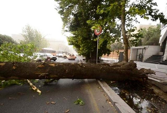 سقوط هولناک درخت بر اثر وزش باد در تهران+ فیلم