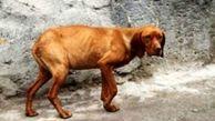 صدور حکم تادیبی دادگاه عمومی برای متهم سگ آزار