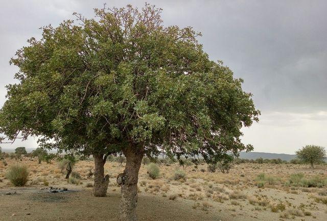 طرح ساماندهی درختان جنگلی شهرستان استهبان