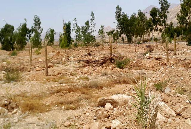 کاشت40 اصله (نفر) درخت نخل در مرکز انتقال نفت قطب آباد