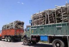 کشف 52 تن چوب قاچاق در هرمزگان