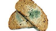 خوردن نان کپک زده توسط احشام باعث ایجاد سم آفلاتوکسین می شود