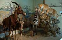 موزه طبیعت و حیات وحش دارآباد با آغاز سال نو بازگشایی شد