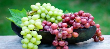 جشن جهانی انگور در ملایر برگزار می شود