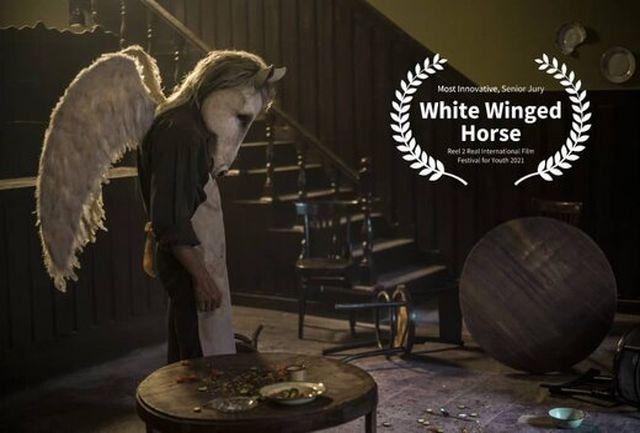 درخشش اسب سفید بالدار در کانادا