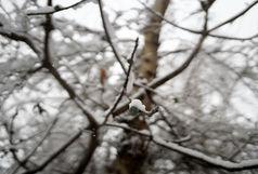 برفی بودن خراسان رضوی تا پایان هفته