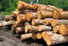 شناسایی باند قاچاق چوب در جنگل های غرب گلستان