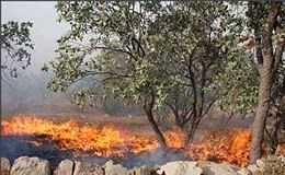 برای چهارمین بار پلنگ دره قم سوخت/3 هکتار پوشش گیاهی قم نابود شد
