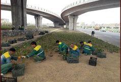 آغاز عملیات درختکاری و کاشت پاییزه فضای سبز