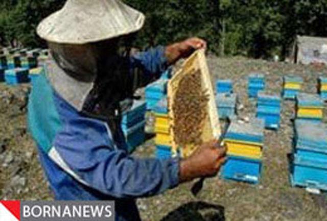 آمارگیری سراسری از زنبورستانهای استان