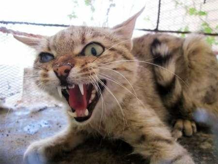 گربهای که دو نفر را کشت و ۵ نفر دیگر را زخمی کرد!