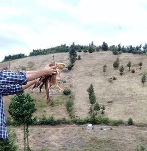 رهاسازی یک بهله پرنده شکاری سارگپه ی پابلند