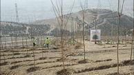 فعالان رسانه یزد ۲۰۰ اصله نهال در بوستان شهید گمنام کاشتند