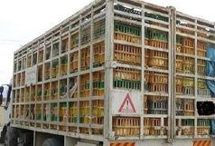 کشف 15 تن مرغ قاچاق از 4 کامیون!