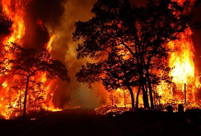 حتی یک دستگاه اطفای حریق هوایی در کشور نداریم/در آتش سوزی جنگل های پاوه، درخت ها سوختن، انسان ها زخمی شدن و  حیوانات کباب